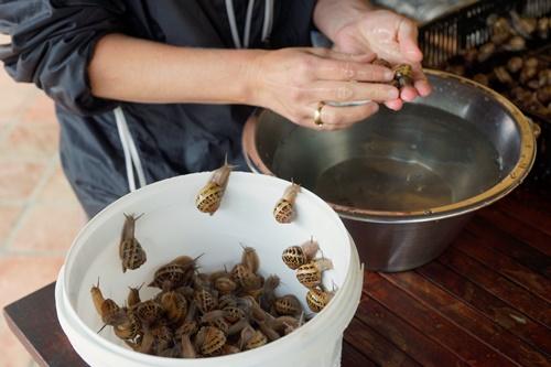 Rinsing the snails